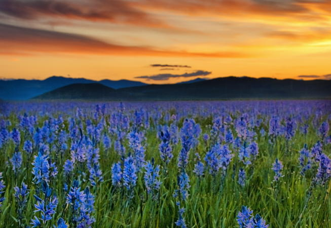 """Sunrise on the Camas Prairie"" by The Knowles Gallery is licensed under CC BY 2.0"